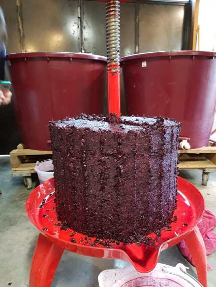 Marc cake?